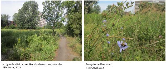 Écosysteme du champ des possibles