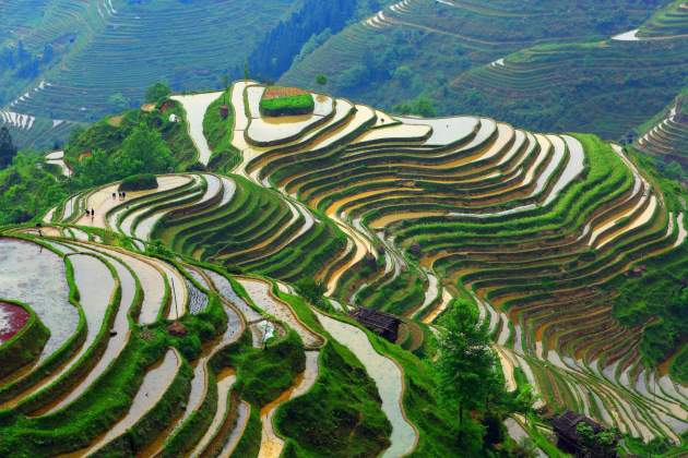 erraced farming in Guizhou.