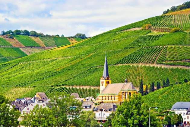 Mosel wine country Barbara Lee